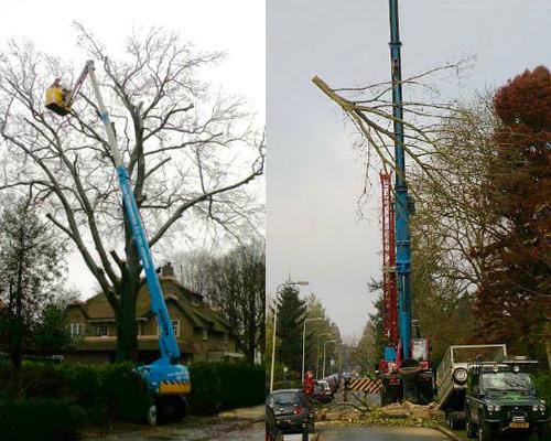 boomwerkbilthoven-bomen-hoogwerker-500x450