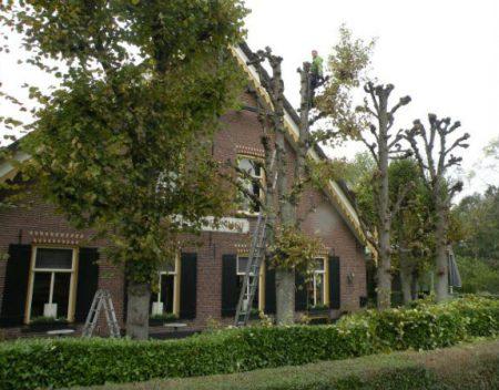 boomwerkbilthoven_tuinonderhoud-onderhoud1.1